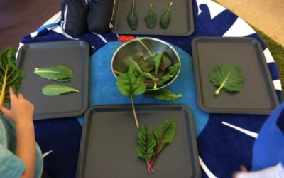 'Picky' Eaters: Exploring New Foods with Preschoolers